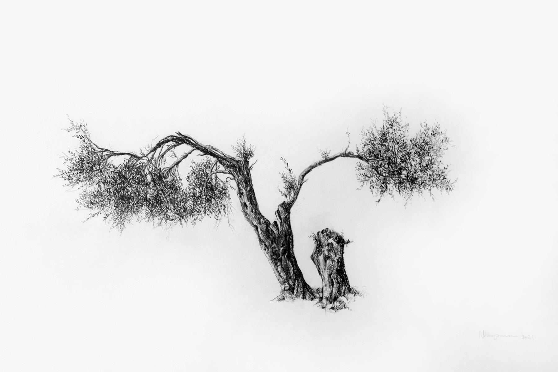 Icarus - Graphite on Arches Paper by artist Neva Bergemann