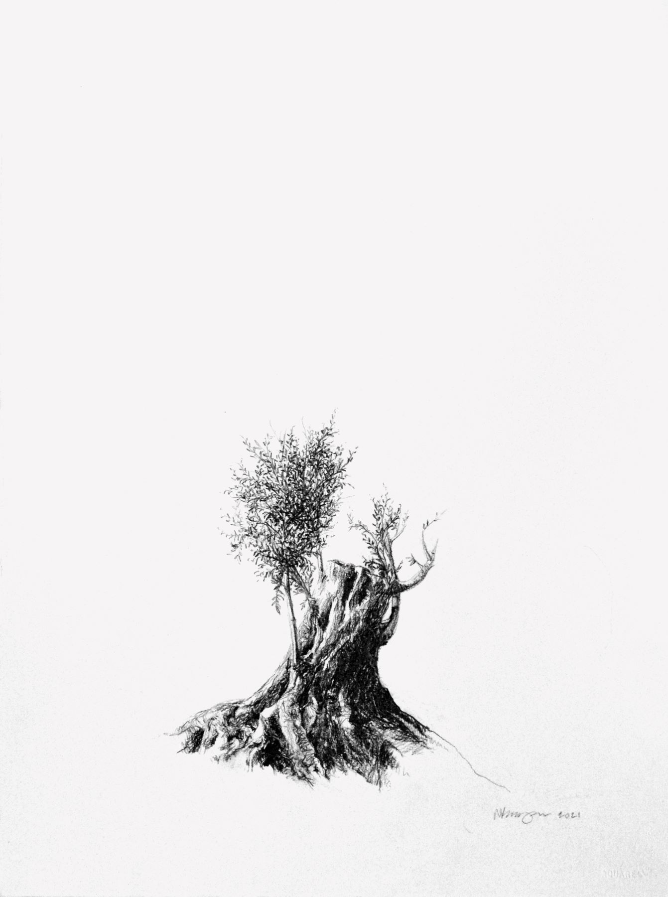 Stump, drawing. Graphite on Arches Paper, by artist Neva Bergemann